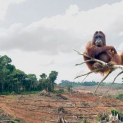 A Nightmare on Palm Oil Street