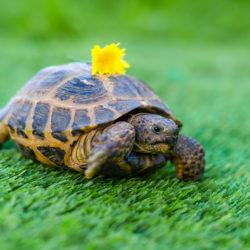 A Tortoise Walks into a Garage....